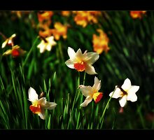 Spring Flowers by Scott Anderson
