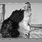 Howling by Karen Havenaar