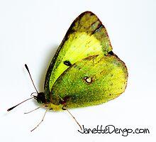 Butterfly by Janette  Dengo