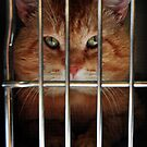 Behind Bars 2 by SamTheCowdog