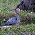 Blue Heron by carolinagirl10