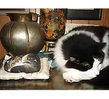DOTTIE AND THE STONE CAT Photographic Print