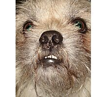 JACK THE WOOKIE Photographic Print