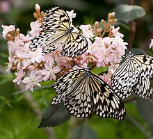 A Butterfly Party by Tracey  Dryka