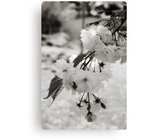 Bokeh Blossoms Canvas Print