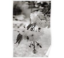 Bokeh Blossoms Poster