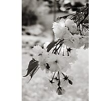 Bokeh Blossoms Photographic Print