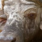 African Buffalo by Michael  Moss