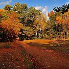 Fall by john forrant