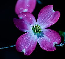 Spring Rain by Phillip M. Burrow
