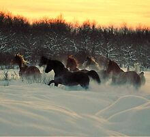 Living Free and Loving Winter by Laurie Zaporzan