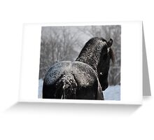 Friesian Stallion with frosting Greeting Card