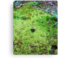 Mossy Kingdom Canvas Print
