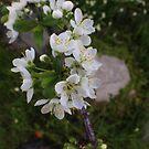 Bright White by aldemore