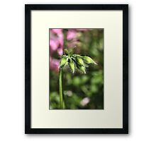 Buddies about to Bloom Framed Print