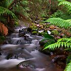 Mountain Creek by Paul Oliver