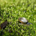 Ramshorn snail by Tula Top