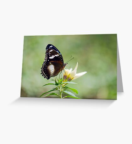 Sweet As - butterfly in Innisfail. Greeting Card