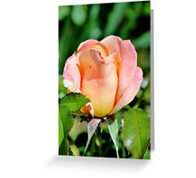 A Fondness for Roses Greeting Card