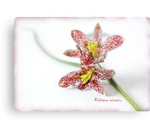 Fritillaria meleagris Metal Print