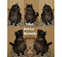 The Kitty Bunch Photographic Print