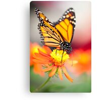 Butterfly 13 Canvas Print