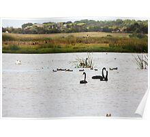 Waterbird Wetlands Poster