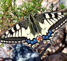 Yellow Butterfly by MiDulceLocura