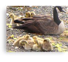 Raising a large family! Metal Print