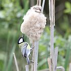 Reed Hopping by dilouise