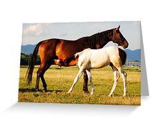 Foal suckling Greeting Card