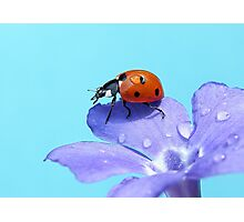 Lady Sings the Blues Photographic Print