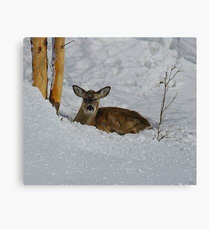 (#2) While I Lay Sleeping ! Series of (3) Photos Canvas Print