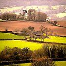 East Devon Rural ...4 by Mike  Waldron