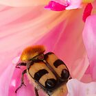 Bee Beetle by ©The Creative  Minds