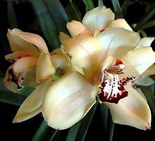 *White Cream Orchid* by Darlene Lankford Honeycutt