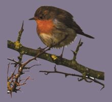 Wild Robin on a Branch Kids Clothes