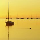 Early Morning Yellow Glow by JKKimball