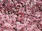 Spring Tree Blossoms Pink Flowering Trees art Baslee Troutman by BasleeArtPrints