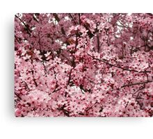 Spring Tree Blossoms Pink Flowering Trees art Baslee Troutman Canvas Print