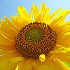 Bright Colorful Yellow Sunflower art Baslee Troutman by BasleeArtPrints