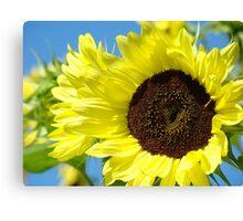 Summer SunFlowers Garden Yellow Sun Flowers art Baslee Troutman Canvas Print