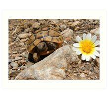 Baby Tortoise Art Print