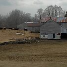 Wating to go in Rural Roots, Belmont Ontario Canada by creativegenious