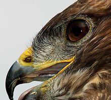 Buzzard Profile by ten2eight