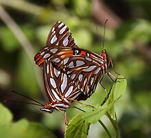 Butterfly Love 3 by Gail Falcon