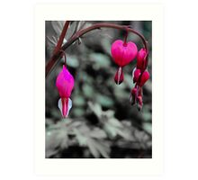 Bleeding Hearts In The Pink Art Print