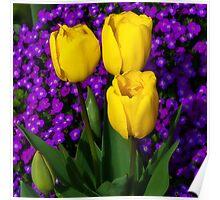 Spring Colours ~ Montacute Gardens Poster