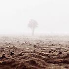 Last Tree Standing by Henrik Malmborg
