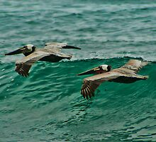 Pelicans In Flight by KOKOPEDAL